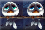 Birdies differences