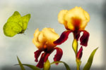 Spring flowers differences